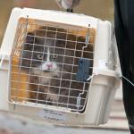 Georgia makes pet evacuation SAFE