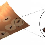 Cyborg roaches to the rescue! Biobots could map collapsed buildings for emergency responders